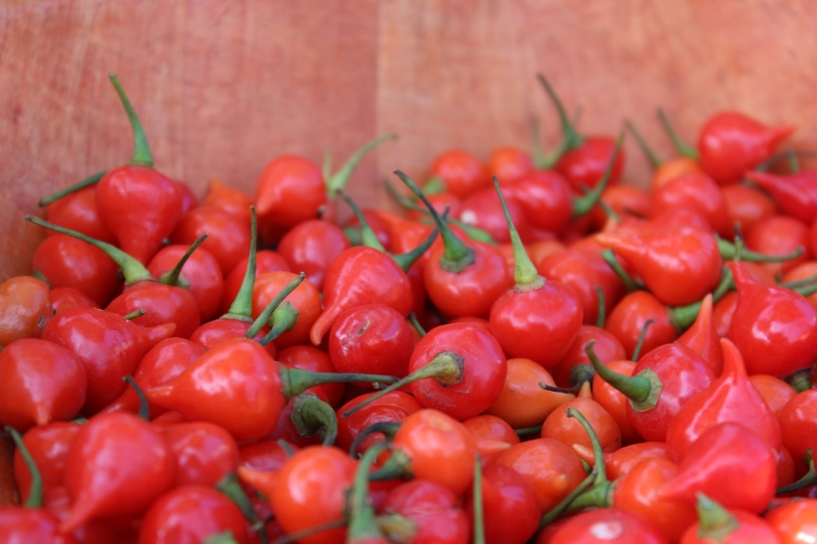 Biquinho is a non-spicy pepper that's perfect for salads and sometimes used to make sweet jam.